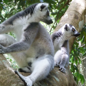 Lemur Research